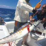 fishing in puerto rico