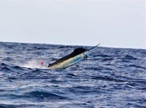 pargueras charters wild caught