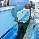 fishing on parguera fishing charter