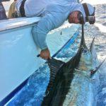 fishing in puerto rico pargueras
